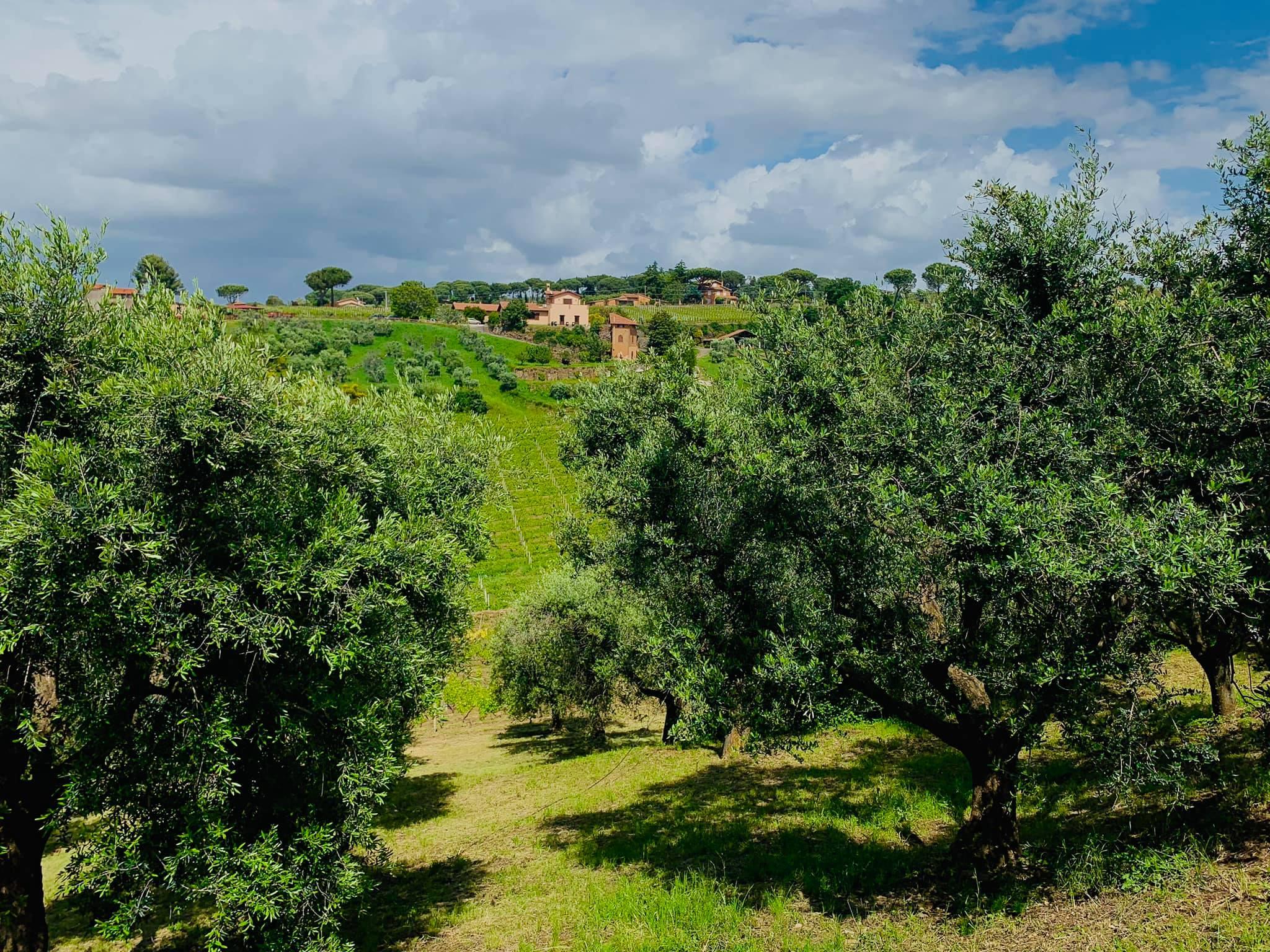 minardi vineyard photo
